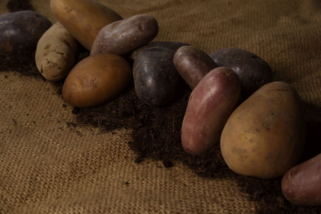 kartoffelgruppe