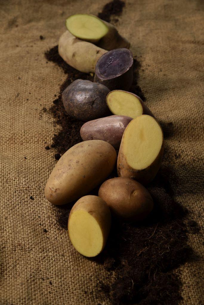 kartoffelsorten-2