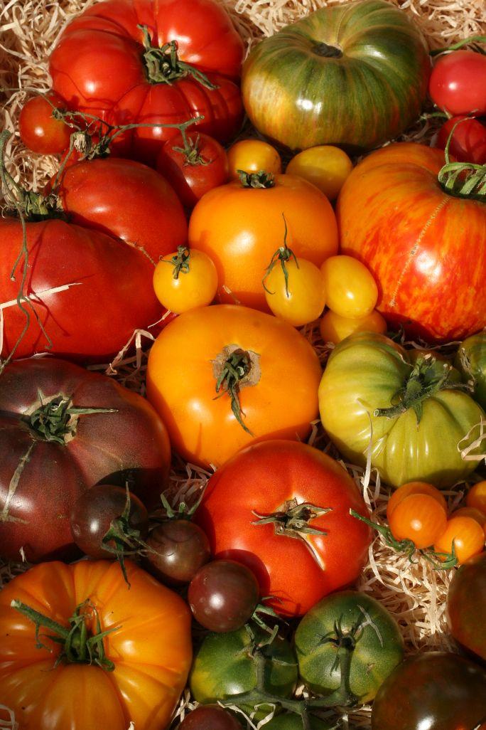 tomaten-holzkiste