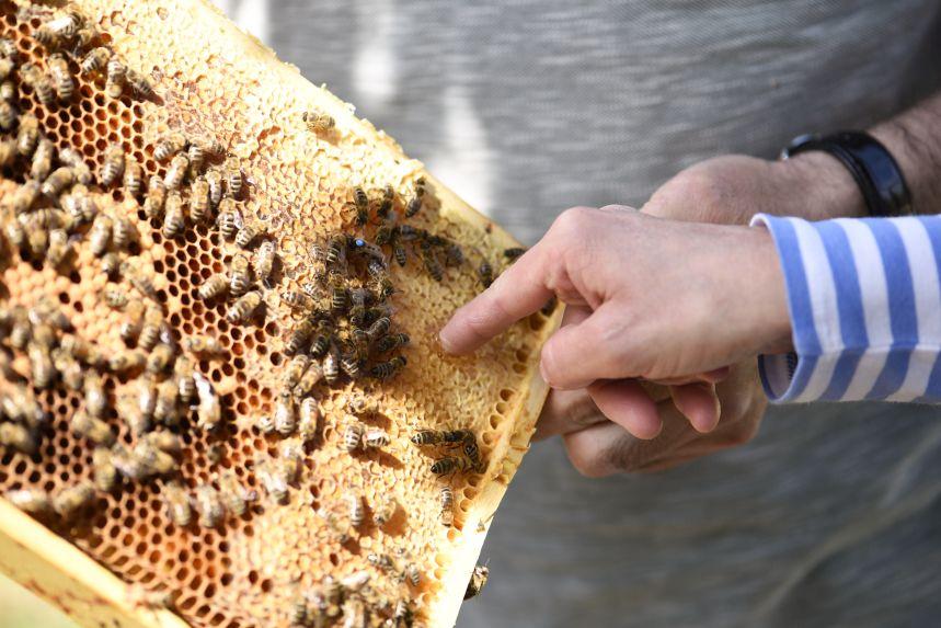 Der Bienenbeschwörer – Die GenussJäger